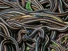 Health officials warn of increase in snakebites