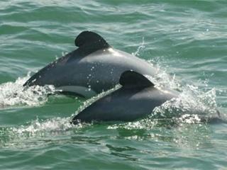 National Aquarium to move 8 dolphins into refuge