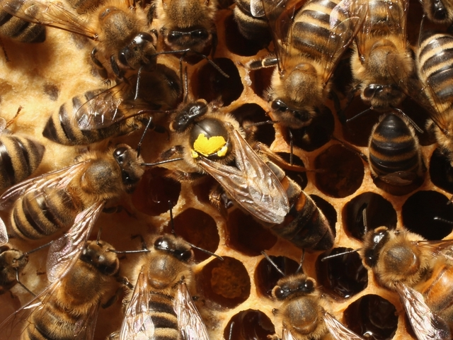 Honeybee losses improve from horrible to bad
