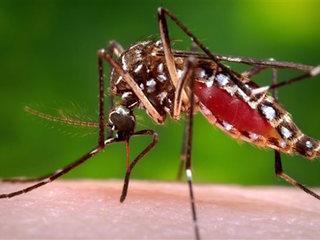 FDA advises Zika screening for blood donations