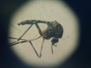 Entomologist discusses Zika virus