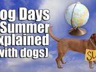 Dog days of summer explained by actual dogs