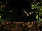 Rabid bat population increases in Maryland