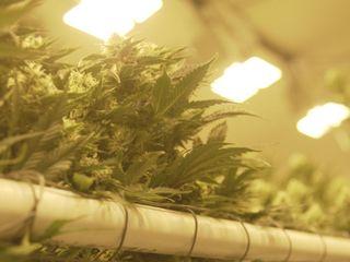 Legal cannabis companies still face hurdles