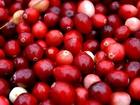 Cranberry juice doesn't prevent UTIs