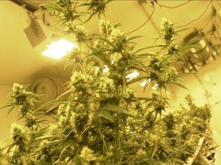 More states legalize recreational marijuana