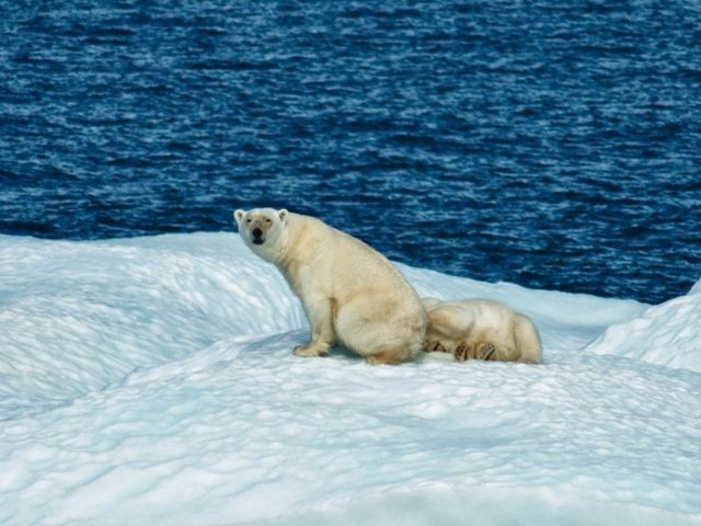 Arctic sea ice hits record monthly low for 7th time in 2016