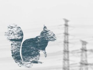 Squirrels threaten the grid more than hacking