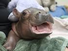 Baby hippo inspires new ice cream flavor