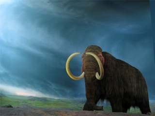 Scientists close to woolly mammoth resurrection