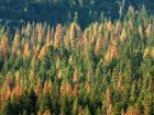 Why US forests growing farther apart is bad news