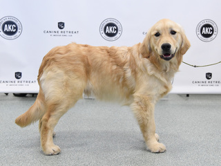 Baltimore County Kennel Club hosts dog show
