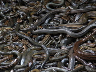 Man caught with snakes in socks pleads guilty