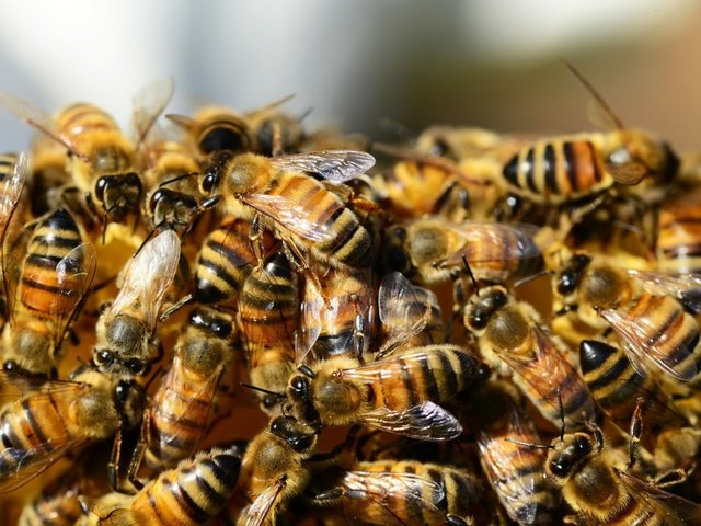 New study links common pesticide to bee deaths