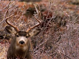 Predator management plan gets pushback in Colo.