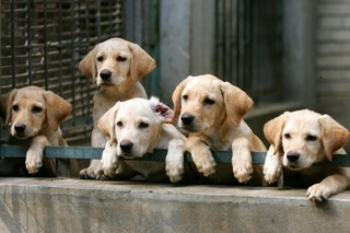 Pet buyers beware, puppy scams on the rise