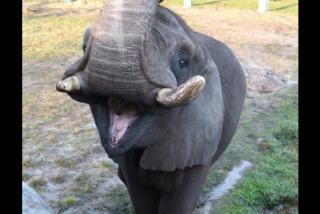 Michael Jackson's elephant exited enclosure